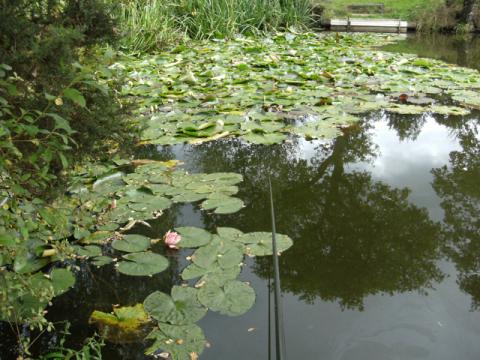 Bream Pond