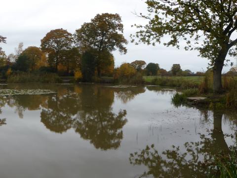 Clover Pond