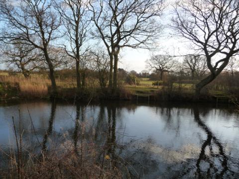 Ditch Pond