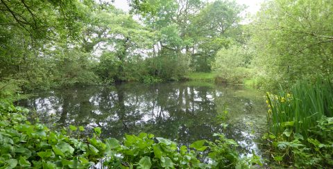 Back Hut Pond