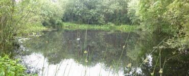 Hut Pond