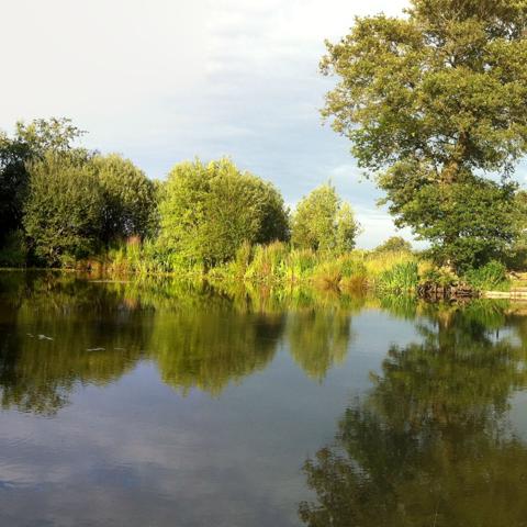 Carp Pond