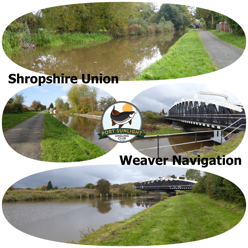 Shroppie_Weaver_collage