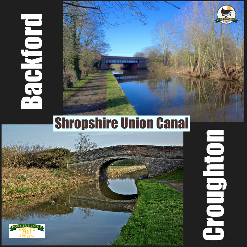 Shroppie Backford collage